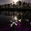 Dragonflies #5 by Light Painting Artist Jason D. Page