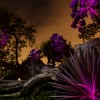 In Bloom by Light Painting Artist Jason D. Page