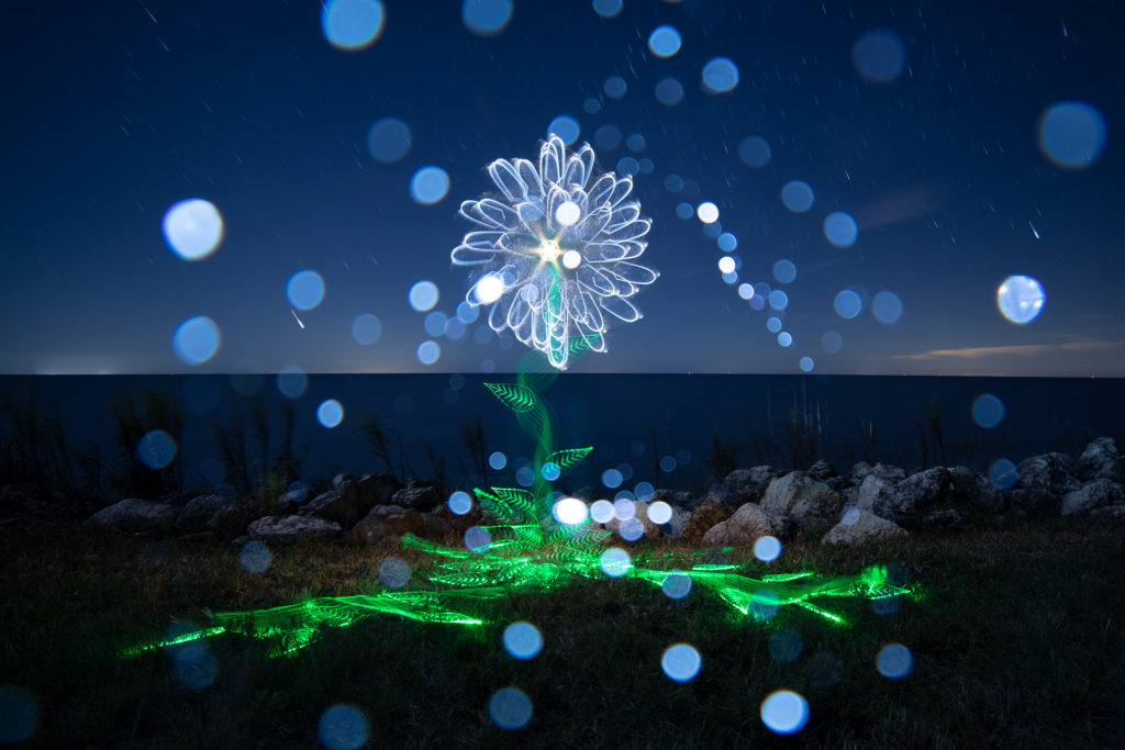 Light Painting of a Flower