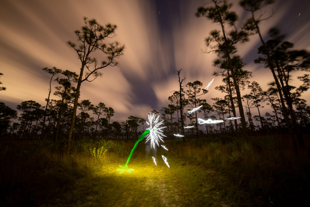 Light Painting Photography Dandelion Tutorial